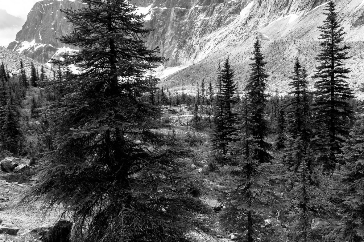 low-quality-looking-down-tree-forest-black-white